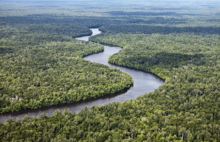 印尼雨林是紅毛猩猩、大象、犀牛等稀有動物、1,500種鳥類及數以千種植物的家園。