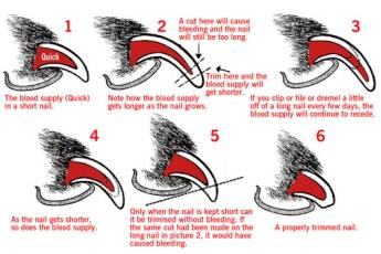 修剪指甲圖示表