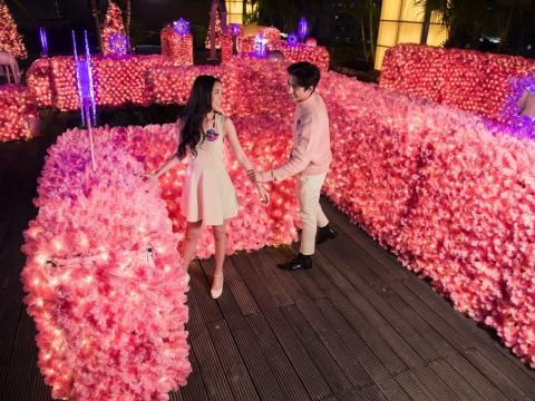 「嫩粉花牆迷宮」由不同深淺層次的千禧粉色聖誕草打造而成。