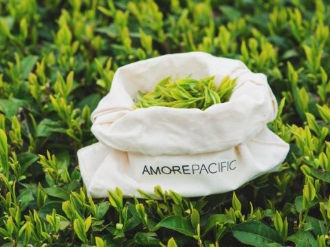「雨前一™」是茶園中最珍罕的綠茶,具極高的抗氧化效能。
