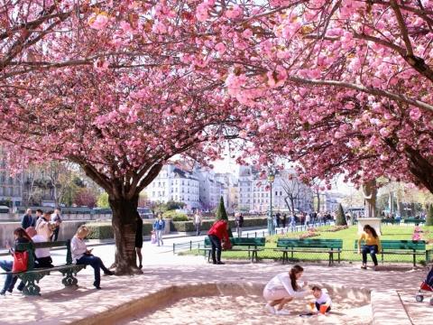 巴黎櫻花景色