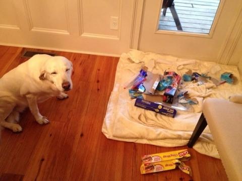 毛孩把任何物品當是牠的玩具