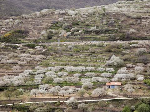 西班牙赫爾特山谷