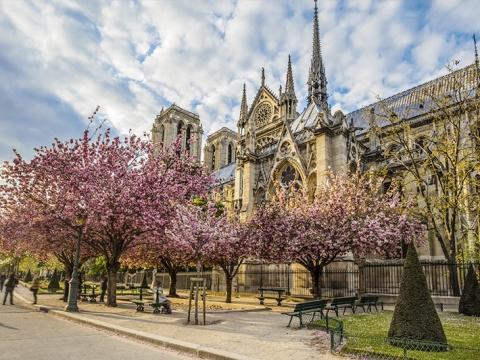 巴黎聖母院櫻花