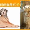 世界上最貴狗狗排行榜!第一位竟然「牠」