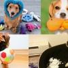 狗奴要知!5個原因話你知點解狗玩具咁重要
