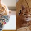 貓奴必睇!5個照顧年老貓咪的重要事項
