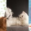點解貓咪會甩毛?5個改善方法你要知