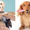 不能忽視狗狗口腔護理!5個方法幫你為愛犬保健牙齒