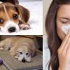 體質過敏又想養狗?你一定要做好6個防過敏方法!