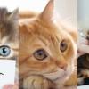 唔想愛貓因肥胖影響健康?4個貓咪減肥法幫到你