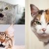 想和喵星人拉近距離?你要知7個跟貓咪建立良好感情的方法