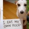 狗狗愛吃便便?4招幫牠改掉壞習慣