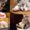 貓奴一定要知!喵星人生病、有壓力的8個異常行為