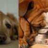 如何妥善照顧年老狗狗?5個老化特徵你要知
